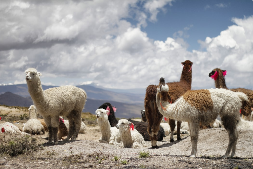 First LAMA meeting has been inaugurated